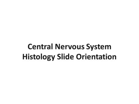 Central Nervous System Histology Slide Orientation