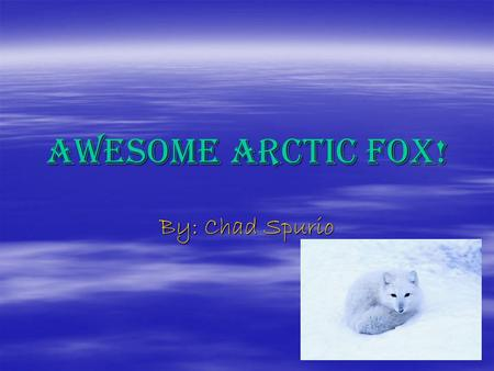 Awesome Arctic Fox! By: Chad Spurio. Introducing the Arctic Fox! Do you want to know about an arctic fox? I will tell you some very cool things about.