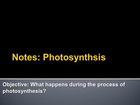 Objective: What happens during the process of photosynthesis?