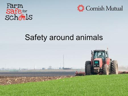 Safety around animals Listen to these noises and try to work out which animal makes that noise. Name that sound.