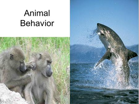 Animal Behavior. Behavior Behavior is action that alters the relationship between an organism and its environment Results from: –An external stimulus.