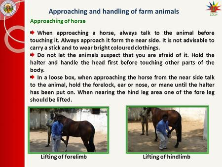 Approaching and handling of farm animals Approaching of horse When approaching a horse, always talk to the animal before touching it. Always approach it.