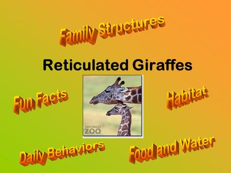 Reticulated Giraffes. Habitat Dry grasslands Eat many trees for food Kenya, Africa.