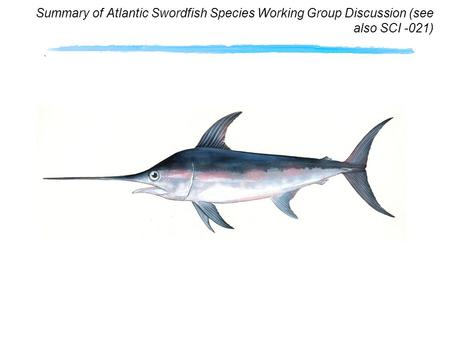 Summary of Atlantic Swordfish Species Working Group Discussion (see also SCI -021)