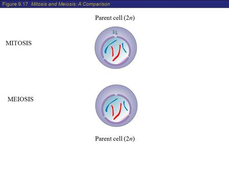 Parent cell (2n) MITOSIS MEIOSIS Parent cell (2n)