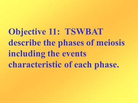 Objective 11: TSWBAT describe the phases of meiosis including the events characteristic of each phase.