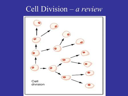 Cell Division – a review. Cell Cycle Control: What happens at each checkpoint? M = mitosis (nuclear division) C = cytokinesis (cytoplasmic division) G.