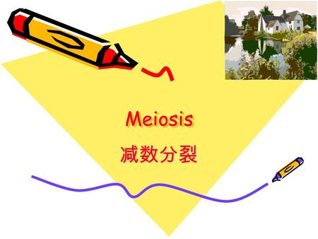MeiosisMeiosis 减数分裂 Learning Objectives Definition of MeiosisDefinition of Meiosis Processes of MeiosisProcesses of Meiosis Significance of MeiosisSignificance.