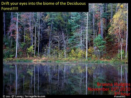 Brianna Hudgins November 15 th,2010 3 rd hour Drift your eyes into the biome of the Deciduous Forest!!!!