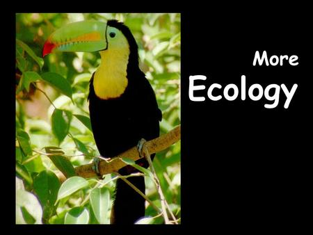 More Ecology. WHAT IS ECOLOGY? Ecology- the scientific study of interactions between organisms and their environments, focusing on energy transfer Ecology.