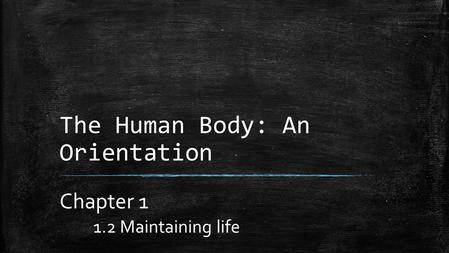 The Human Body: An Orientation Chapter 1 1.2 Maintaining life.