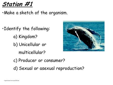 Station #1 Make a sketch of the organism. Identify the following: a) Kingdom? b) Unicellular or multicellular? c) Producer or consumer? d) Sexual or asexual.