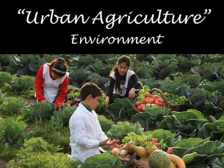 """Urban Agriculture"" Environment. Definition Is the agricultural and livestock practice of growing and cultivating healthy and non- modified food in densely."