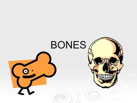 BONES. The Skeleton -Contains approx. 206 bones. -Main function: rigid framework for support, protection, and storage. -The human skeleton is divided.
