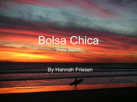 Bolsa Chica State Beach By Hannah Friesen. Bolsa Chica beach is a great place for fishing, hiking, swimming, surfing bird watching, and just plain camping.