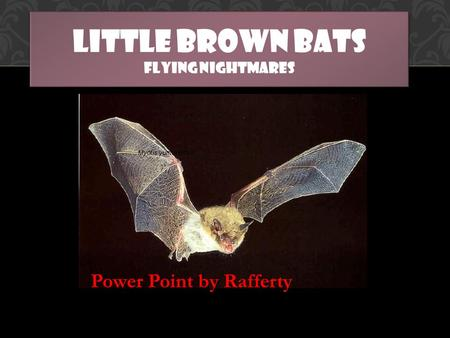 LITTLE BROWN BATS FLYING NIGHTMARES Power Point by Rafferty.