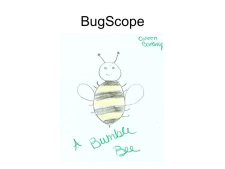 BugScope. What and Where? Bumble bees are large, hairy, and typically black and yellow. They collect and carry pollen on their hind legs to transfer it.
