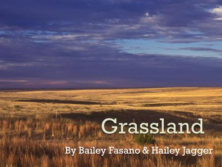 By Bailey Fasano & Hailey Jagger.  Grasslands are areas dominated by grasses and forbs, and have few or no trees.  Categorized as savannas, pampas,