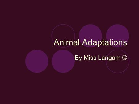 Animal Adaptations By Miss Langam. Defenses Venom: snakes Skin: rhinoceros Weapons  Antlers: deer  Hooves: deer  Claws: cat  Teeth: Raccoon  Spines: