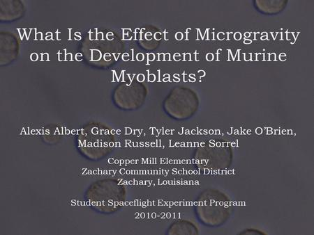 What Is the Effect of Microgravity on the Development of Murine Myoblasts? Student Spaceflight Experiment Program 2010-2011 Alexis Albert, Grace Dry, Tyler.