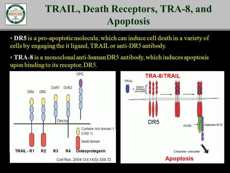 DR5 is a pro-apoptotic molecule, which can induce cell death in a variety of cells by engaging the it ligand, TRAIL or anti-DR5 antibody. TRA-8 is a monoclonal.