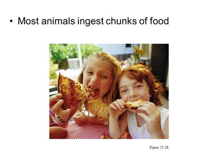 Most animals ingest chunks of food Figure 21.1E. 21.