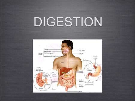 DIGESTION. Digestion Mechanical and chemical breakdown of foods... Absorption of resulting nutrients by cells ALIMENTARY CANAL: tube extending 9 meters.