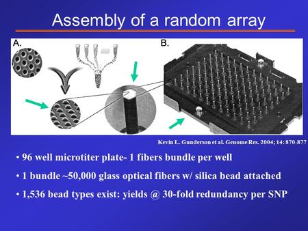 Kevin L. Gunderson et al. Genome Res. 2004; 14: 870-877 Assembly of a random array 96 well microtiter plate- 1 fibers bundle per well 1 bundle ~50,000.