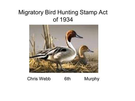 Migratory Bird Hunting Stamp Act of 1934 Chris Webb 6th Murphy.