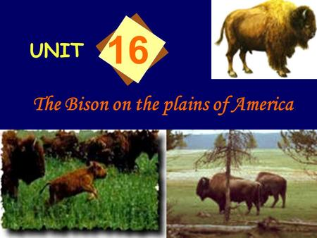 UNIT 16 The Bison on the plains of America Who were the first settlers on the plains of America? And how did they live? Native Americans. They lived.