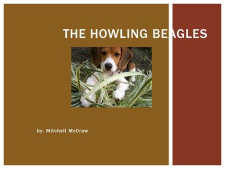 By: Mitchell McCraw THE HOWLING BEAGLES.  Phylum: Chordata- an animal  Genus: Canis- coyote, wolves, dogs  Species: Familiaris- domesticated  Diet:
