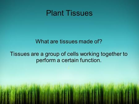 Plant Tissues What are tissues made of? Tissues are a group of cells working together to perform a certain function..