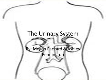 The Urinary System By: Megan Packard & Ashley Pennington.