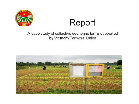 Report A case study of collective economic forms supported by Vietnam Farmers' Union.