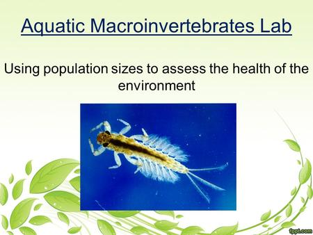 Aquatic Macroinvertebrates Lab Using population sizes to assess the health of the environment.