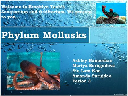 MOLLUSKS Phylum Mollusks Ashley Hanooman Mariya Borogodova Siu Lam Koo Amanda Surujdeo Period 3 Welcome to Brooklyn Tech's Zooquarium and Odditorium. We.