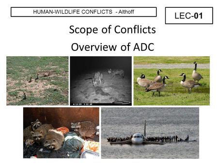 Scope of Conflicts Overview of ADC HUMAN-WILDLIFE CONFLICTS - Althoff LEC-01.