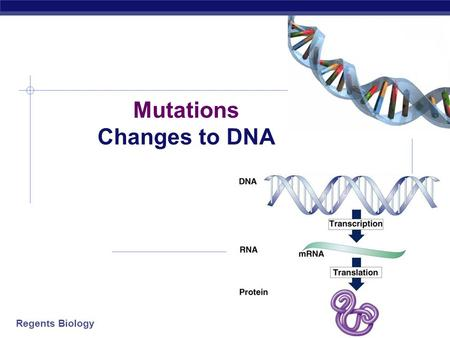 Regents Biology 2009-2010 Mutations Changes to DNA.
