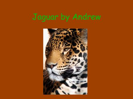 Jaguar by Andrew. Babies the baby jaguar is born in den and has spots and stay with there moms and dads for tree years.