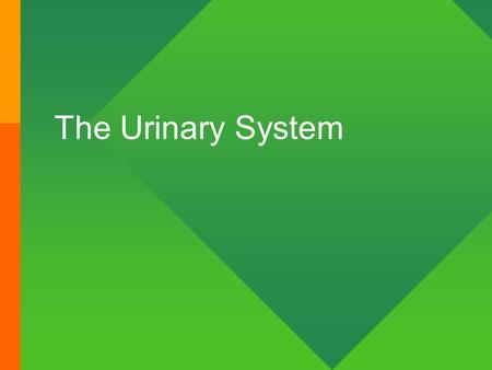 The Urinary System. Kidney Functions (1) Your kidneys filters your blood daily, allowing urinary excretion of toxins, metabolic wastes, and excess ions.
