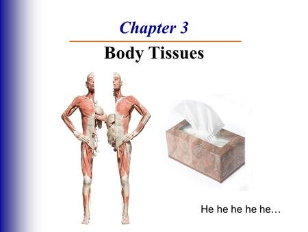 Chapter 3 Body Tissues He he he he he…. Body Tissues  Cells are specialized for particular functions  Tissues - Groups of cells with similar structure.