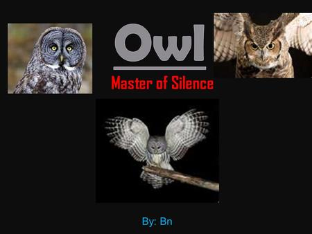 Master of Silence By: Bn.  Owls scientific name is strigiformes  Owls are raptors (which is a bird that eats prey)  Owls are part of the bird family.