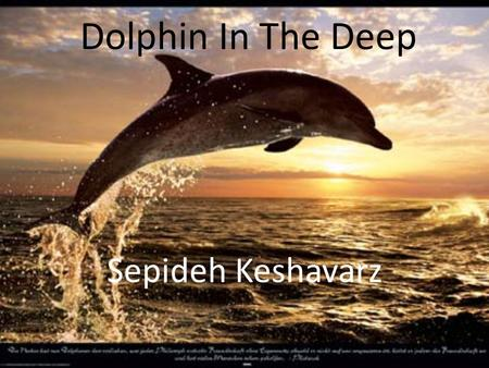 Dolphin In The Deep Sepideh Keshavarz.