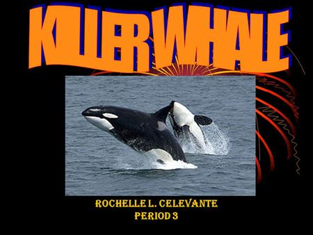 ROCHELLE L. CELEVANTE PERIOD 3. COMMON NAMES ORCA SEAWOLF BLACKFISH.
