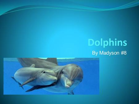 Dolphins By Madyson #8. Background The dolphins are mammals. A dolphin can live to be 70 or 80! The Bottlenose dolphin can live over 40 years!