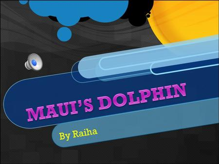 By Raiha Maui's Dolphin is the smallest dolphin in the world and is also known as the North Island Hectors Dolphin. They have distinctive grey, black.