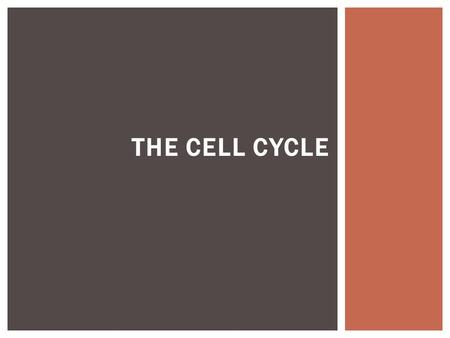THE CELL CYCLE. THE CYCLE OF LIFE Multicellular You Mitosis Meiosis Unicellular You Unicellular Offspring.