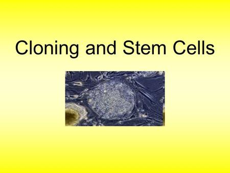 stem cells ivf and cloning five Ethical considerations of egg donation 5 the hwang cloning the five basic steps of in vitro fertilization risks of egg donation the source of stem cells.