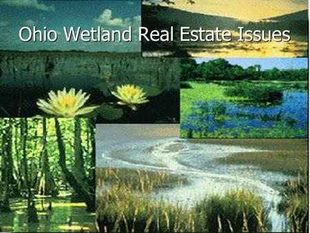 Ohio Wetland Real Estate Issues. Definition Definition Federal Regulations Federal Regulations Permits Permits Solutions Solutions Legal Statues Legal.