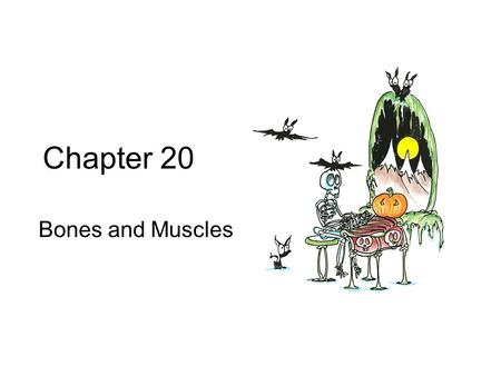 Chapter 20 Bones and Muscles.